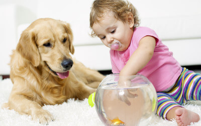 Carpet Cleaning Solutions for Pets