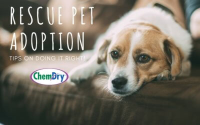 Tips for a Successful Rescue Pet Adoption