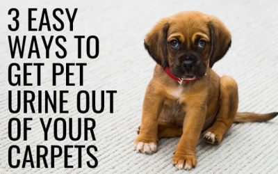 3 Easy Ways to Get Pet Urine Out of Your Carpets