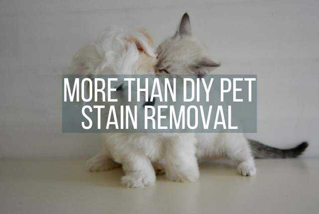 Get More Than Just DIY Pet Stain Removal