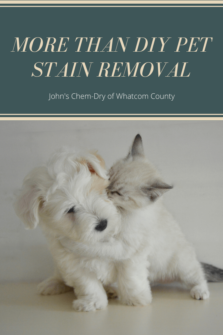 Pet Stain Removal in Bellingham